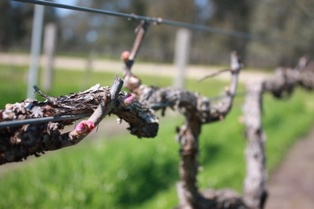 Spring At Pfeiffer Wines