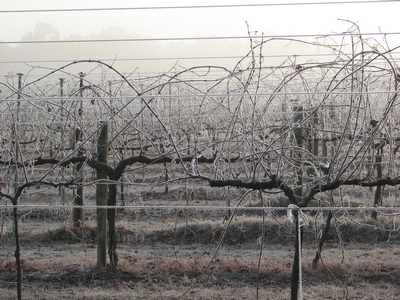 Winter At Pfeiffer Wines