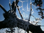 Winter Frost Amongst The Vines_1